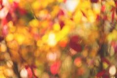 Imagen del fondo del extracto del oro del otoño, bokeh borroso , Marrón y amarilla hojas enfocadas suavidad anaranjada fotos de archivo libres de regalías