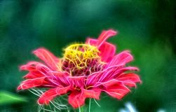 Imagen del fractal de la flor del zinia fotografía de archivo