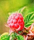 Imagen del fractal de la frambuesa libre illustration