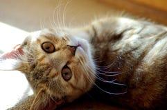 Imagen del gato imagen de archivo libre de regalías