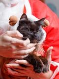 Imagen del gato negro en traje de los ciervos del ` s del Año Nuevo Imagen de archivo