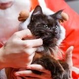 Imagen del gato negro del ` s del Año Nuevo en traje de los ciervos Fotografía de archivo