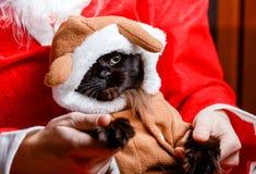 Imagen del gato negro del ` s del Año Nuevo en traje de los ciervos Imagen de archivo libre de regalías