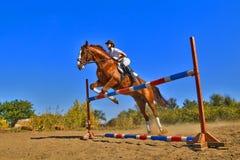 Jinete con el caballo criado en línea pura Foto de archivo