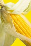 Imagen del maíz Imagen de archivo libre de regalías