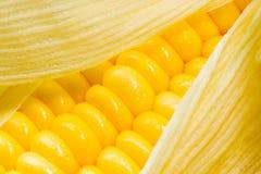 Imagen del maíz Imagenes de archivo
