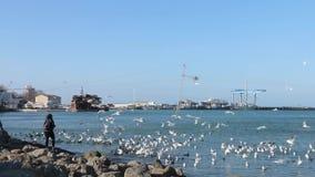 Imagen del mar en el invierno La mujer joven alimenta cisnes y gaviotas con los pedazos de pan en un fondo de la salida del sol b almacen de metraje de vídeo