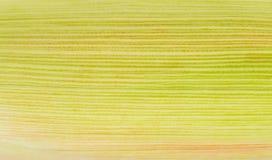 Imagen del maíz Fotos de archivo libres de regalías