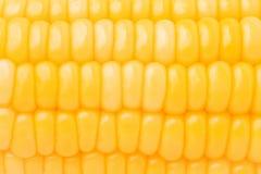 Imagen del maíz Fotos de archivo