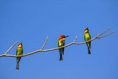 Imagen del pájaro en la rama en fondo del cielo Foto de archivo