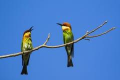 Imagen del pájaro en la rama en fondo del cielo Fotos de archivo