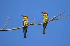 Imagen del pájaro en la rama en fondo del cielo Imagen de archivo libre de regalías