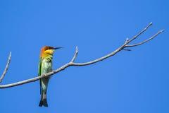 Imagen del pájaro en la rama en fondo del cielo Imagenes de archivo