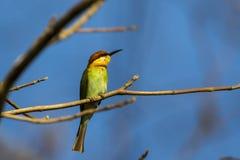 Imagen del pájaro en la rama en fondo del cielo Imagen de archivo