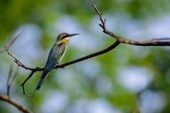 Imagen del pájaro en la rama en fondo natural Animales salvajes Foto de archivo