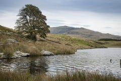Imagen del paisaje de la tarde del lago Llyn y Dywarchen en otoño en Sn Imágenes de archivo libres de regalías