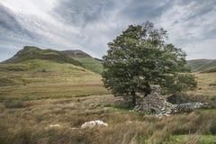 Imagen del paisaje de la tarde del lago Llyn y Dywarchen en otoño en Sn Imagen de archivo libre de regalías