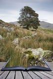 Imagen del paisaje de la tarde del lago Llyn y Dywarchen en otoño en Sn Foto de archivo libre de regalías