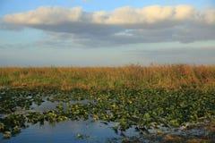 Imagen del paisaje de los marismas de FL de sawgrass imagen de archivo