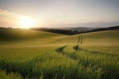 Imagen del paisaje del verano del campo de trigo en la puesta del sol con l hermoso Foto de archivo