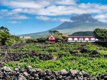 Imagen del pico de la montaña con las casas y el viñedo en la isla del pico Azores imagen de archivo libre de regalías