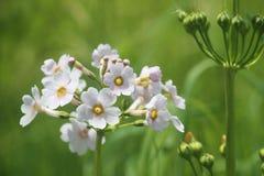Imagen del primer de la primavera japonesa Foto de archivo