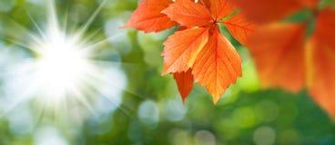 imagen del primer de las hojas de otoño Imagen de archivo