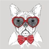Imagen del retrato de un perro con los vidrios en forma de corazón Ilustración del vector Fotos de archivo libres de regalías