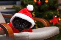 Imagen del ` s del Año Nuevo del gato negro en el traje de Papá Noel Imagen de archivo libre de regalías