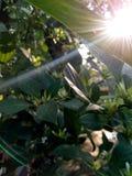 Imagen del sol naciente del bosque Fotografía de archivo