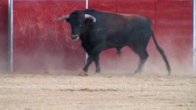 Imagen del toro que lucha de España. toro negro