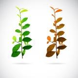 Imagen del vector de hojas Imagen de archivo libre de regalías