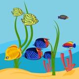 Imagen del vector de pescados tropicales coloridos fotos de archivo