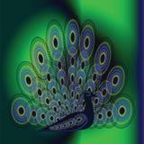 Imagen del vector del pavo real Imágenes de archivo libres de regalías