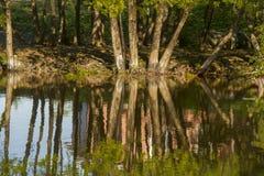 Imagen del verano de los árboles que reflejan en un río con efecto brillante Fotografía de archivo