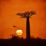 Imagen del vintage del baobab Imagen de archivo libre de regalías