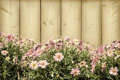 Imagen diseñada retra de las flores rosadas de la margarita Imagen de archivo libre de regalías