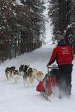 Imagen dogsledding del invierno vertical en el parque del invierno, Colorado fotografía de archivo