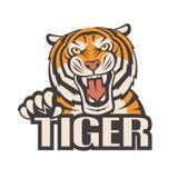 Imagen enojada del tigre Imagenes de archivo