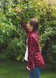Imagen entonada de las manzanas hermosas de la cosecha del adolescente en el jardín Foto de archivo libre de regalías