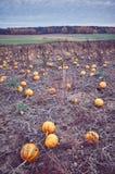 Imagen entonada vintage de un campo de la calabaza en otoño fotografía de archivo libre de regalías