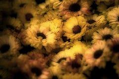 Imagen envejecida de flores Imágenes de archivo libres de regalías
