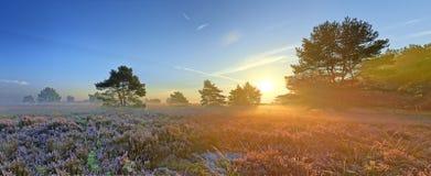 Imagen escénica de la salida del sol sobre paramera rosada floreciente Fotografía de archivo