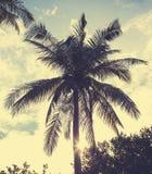 Imagen filtrada retra del vintage de la palmera en la puesta del sol Imagen de archivo