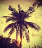 Imagen filtrada retra del vintage de la palmera en la puesta del sol Imagenes de archivo