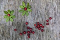 Imagen hecha de hojas y de bayas Imágenes de archivo libres de regalías