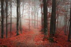 Bosque hermoso durante otoño foto de archivo