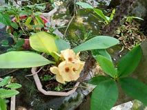 Imagen hermosa de la flor amarilla del color fotos de archivo libres de regalías