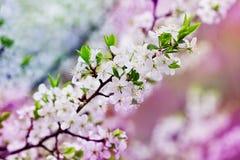 Imagen hermosa de la rama de árbol floreciente imagenes de archivo