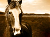 Imagen hermosa de la sepia de la pista de caballo Foto de archivo